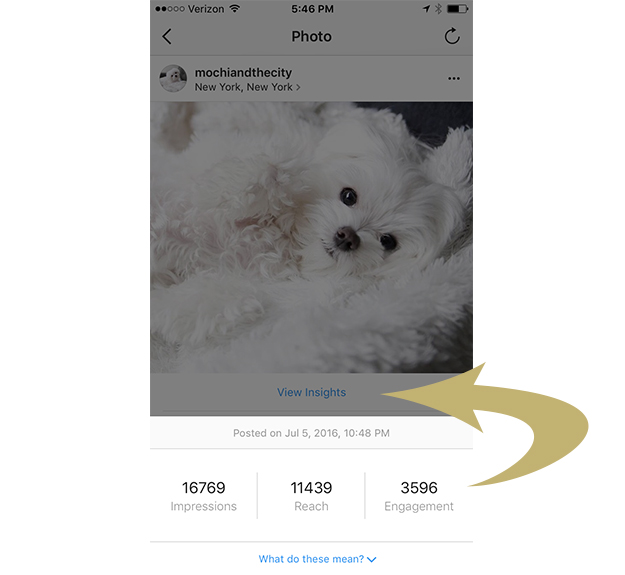 Instagram post insights for @mochiandthecity Instagram celebrity dog