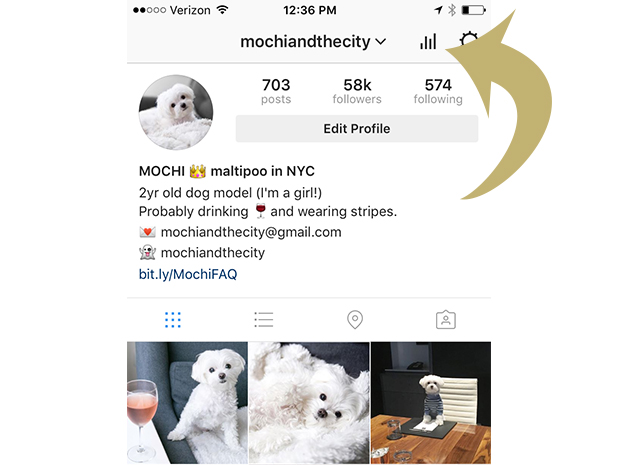 Mochi Instagram Dog Profile